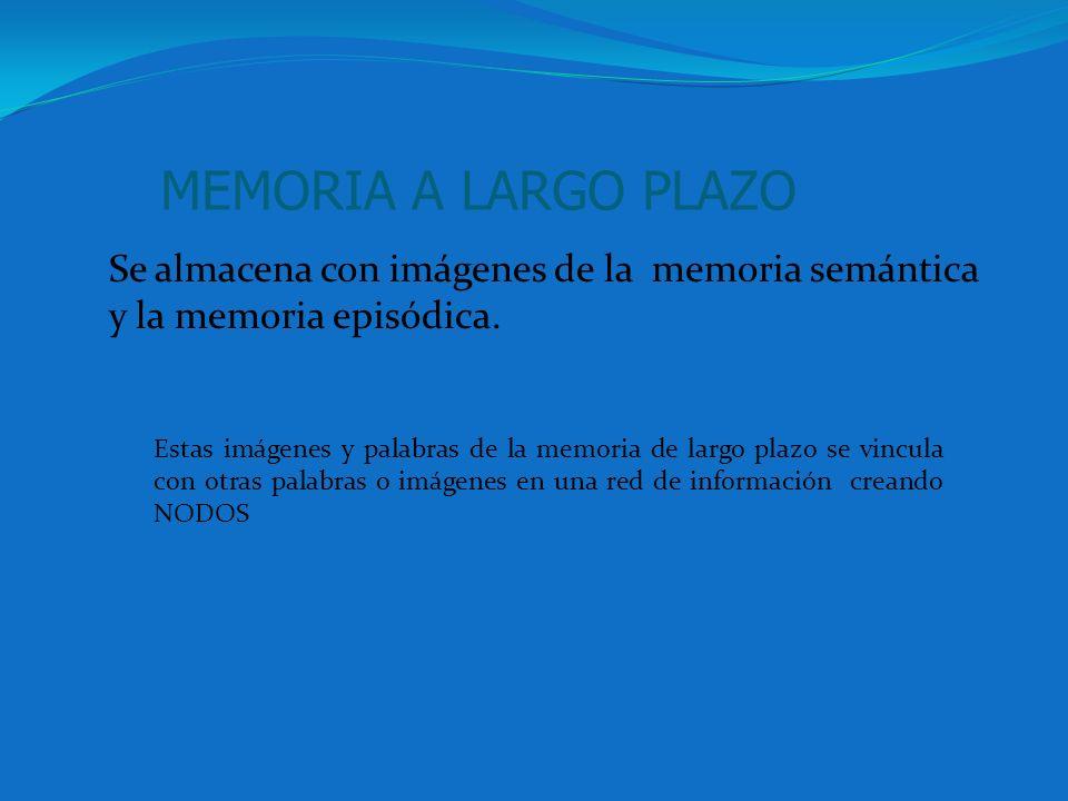 MEMORIA A LARGO PLAZO Se almacena con imágenes de la memoria semántica y la memoria episódica. Estas imágenes y palabras de la memoria de largo plazo