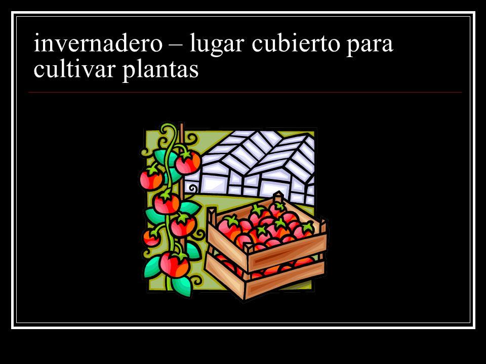 invernadero – lugar cubierto para cultivar plantas