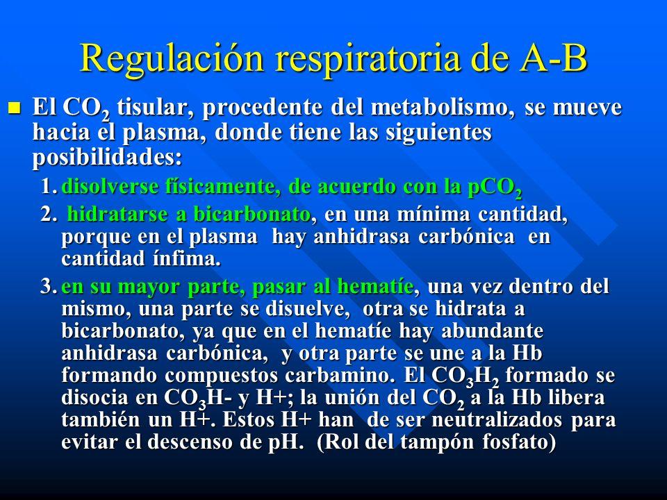 Regulación respiratoria de A-B El CO 2 es un gas soluble en los líquidos corporales y muy difusible, unas 20 veces más que el O 2, y tiende a moverse