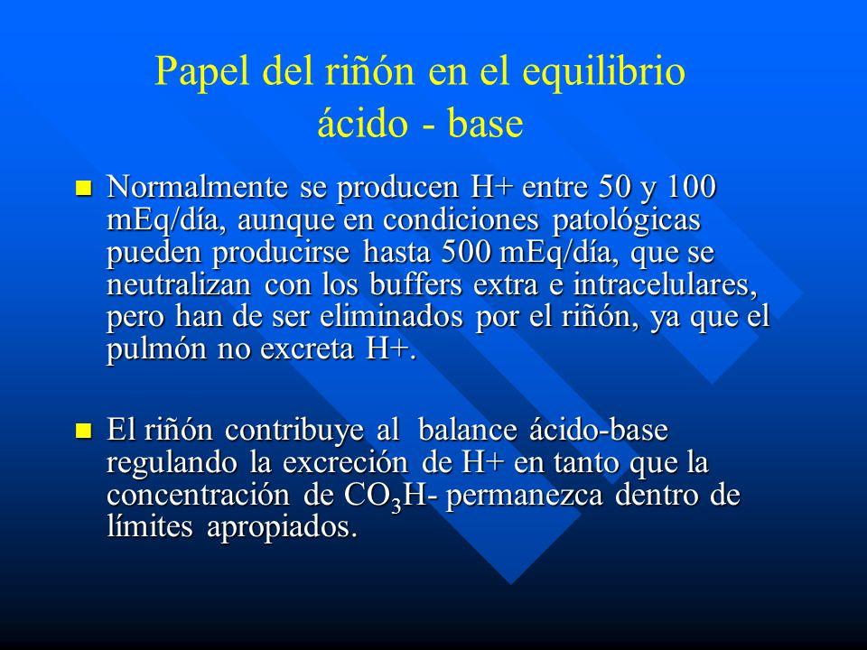 Regulación respiratoria de A-B Cuando la producción de CO 2 aumenta, aumenta en consecuencia la ventilación alveolar si el pulmón puede responder adec
