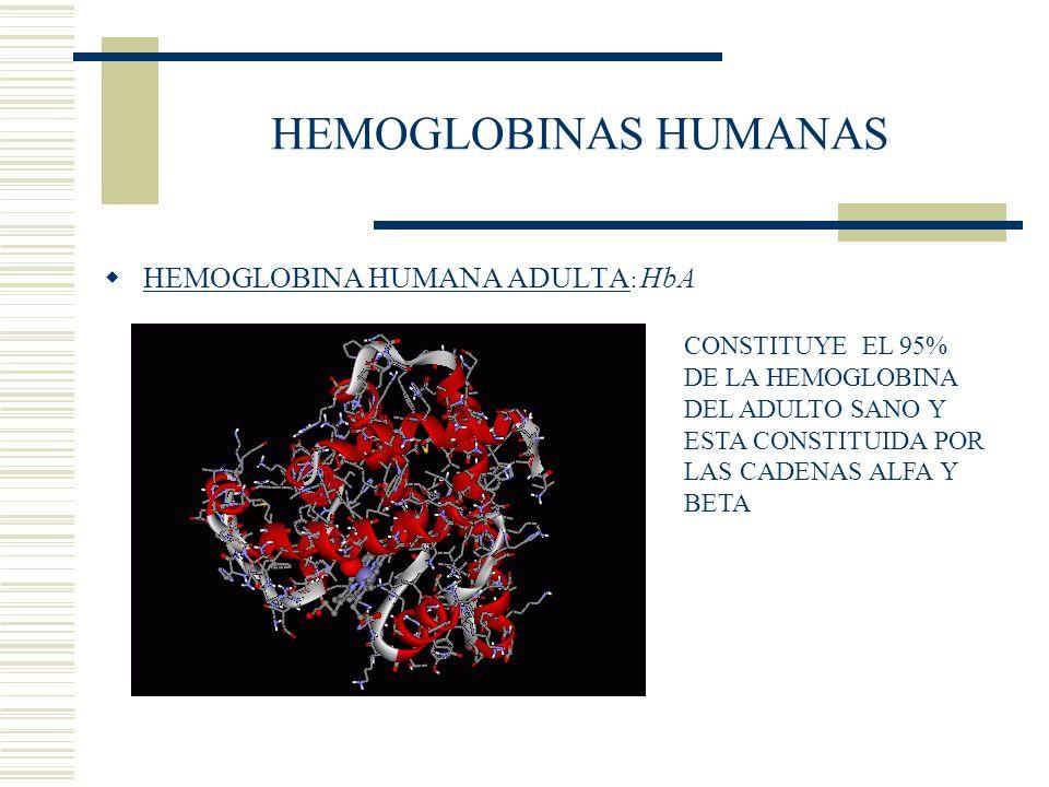 HEMOGLOBINAS HUMANAS HEMOGLOBINA HUMANA ADULTA : HbA CONSTITUYE EL 95% DE LA HEMOGLOBINA DEL ADULTO SANO Y ESTA CONSTITUIDA POR LAS CADENAS ALFA Y BET