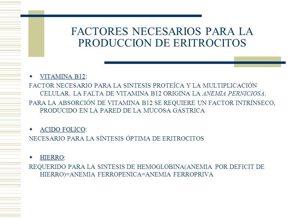 FACTORES NECESARIOS PARA LA PRODUCCION DE ERITROCITOS VITAMINA B12 VITAMINA B12: FACTOR NECESARIO PARA LA SINTESIS PROTEÍCA Y LA MULTIPLICACIÓN CELULA