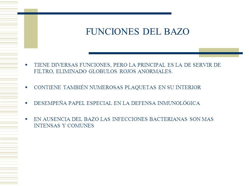 FUNCIONES DEL BAZO TIENE DIVERSAS FUNCIONES, PERO LA PRINCIPAL ES LA DE SERVIR DE FILTRO, ELIMINADO GLOBULOS ROJOS ANORMALES. CONTIENE TAMBIÉN NUMEROS