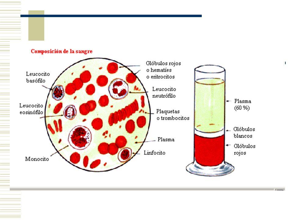 Funciones de la Sangre TRANSPORTE TRANSPORTE: DE SUSTANCIAS DIVERSAS A TRAVÉS DEL ORGANISMO GASES RESPIRATORIOS NUTRIENTES PRODUCTOS DEL METABOLISMO VEHICULO DE HORMONAS, VITAMINAS, ENZIMAS DISIPADOR DEL CALOR CORPORAL HOMEOSTASIS HOMEOSTASIS (pH, TEMPERATURA, CONCENTRACIÓN) PREVENCION DE FENOMENOS HEMORRAGICOS PREVENCION DE FENOMENOS HEMORRAGICOS DEFENSA INMUNOLOGICA DEFENSA INMUNOLOGICA VOLUMEN SANGUINEO VOLUMEN SANGUINEO