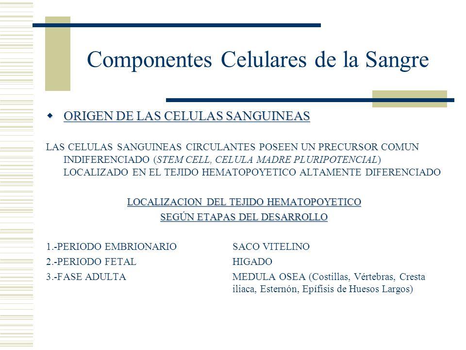 Componentes Celulares de la Sangre ORIGEN DE LAS CELULAS SANGUINEAS ORIGEN DE LAS CELULAS SANGUINEAS LAS CELULAS SANGUINEAS CIRCULANTES POSEEN UN PREC