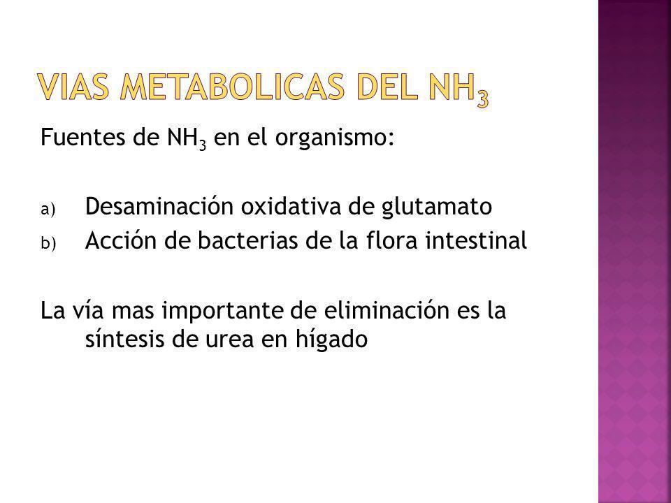 Fuentes de NH 3 en el organismo: a) Desaminación oxidativa de glutamato b) Acción de bacterias de la flora intestinal La vía mas importante de elimina