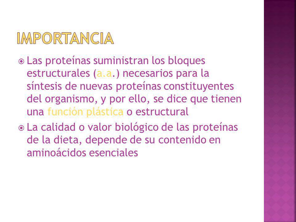 Las proteínas suministran los bloques estructurales (a.a.) necesarios para la síntesis de nuevas proteínas constituyentes del organismo, y por ello, s