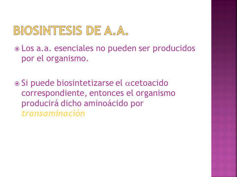 Los a.a. esenciales no pueden ser producidos por el organismo. Si puede biosintetizarse el cetoacido correspondiente, entonces el organismo producirá
