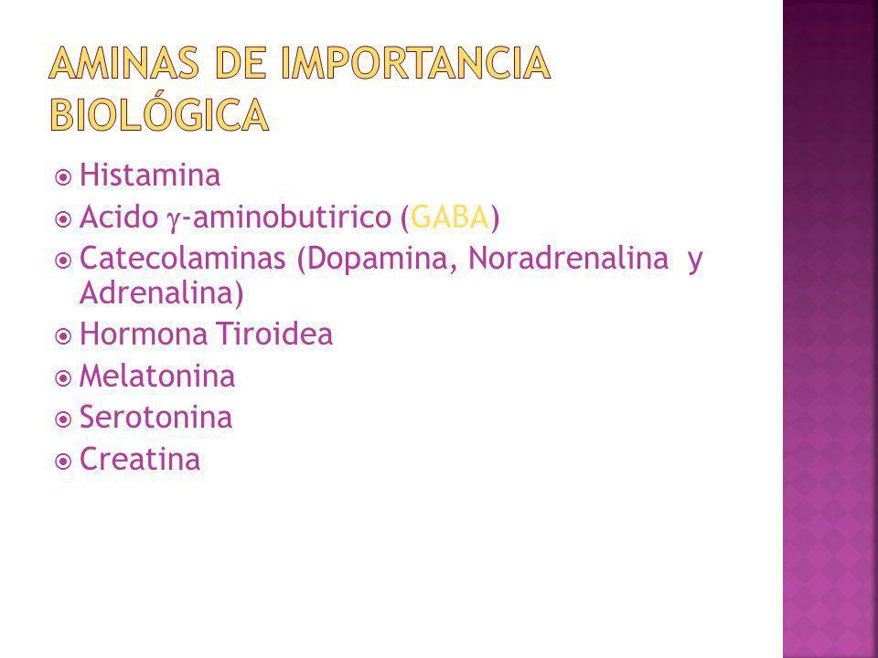 Histamina Acido -aminobutirico (GABA) Catecolaminas (Dopamina, Noradrenalina y Adrenalina) Hormona Tiroidea Melatonina Serotonina Creatina