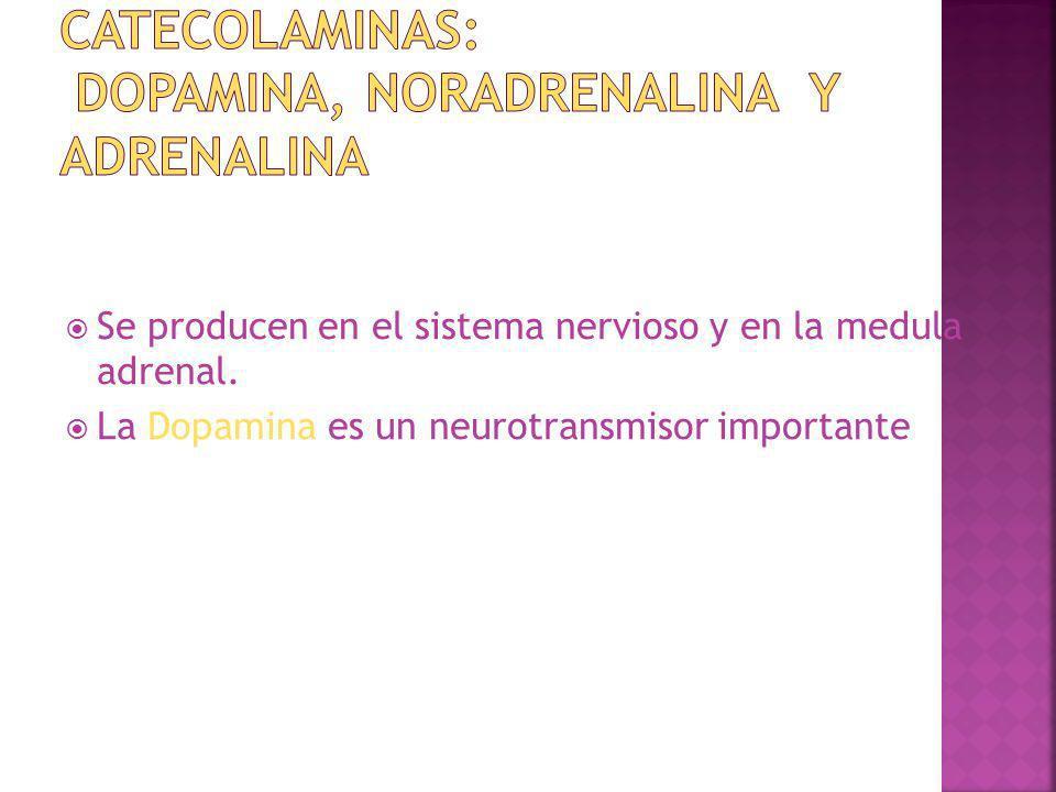Se producen en el sistema nervioso y en la medula adrenal. La Dopamina es un neurotransmisor importante