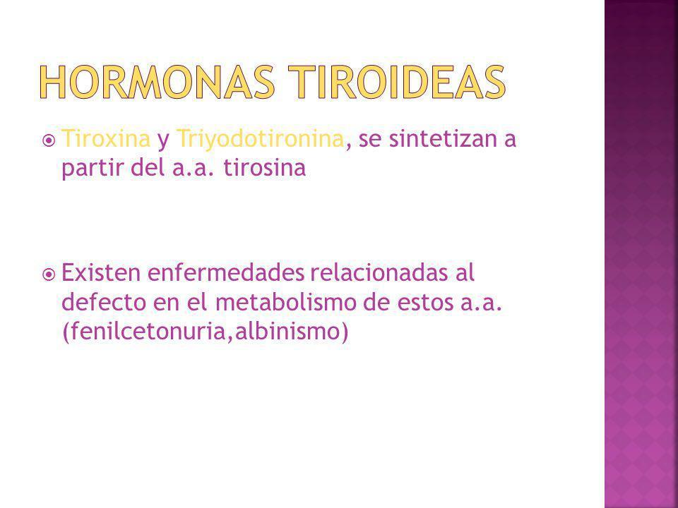 Tiroxina y Triyodotironina, se sintetizan a partir del a.a. tirosina Existen enfermedades relacionadas al defecto en el metabolismo de estos a.a. (fen