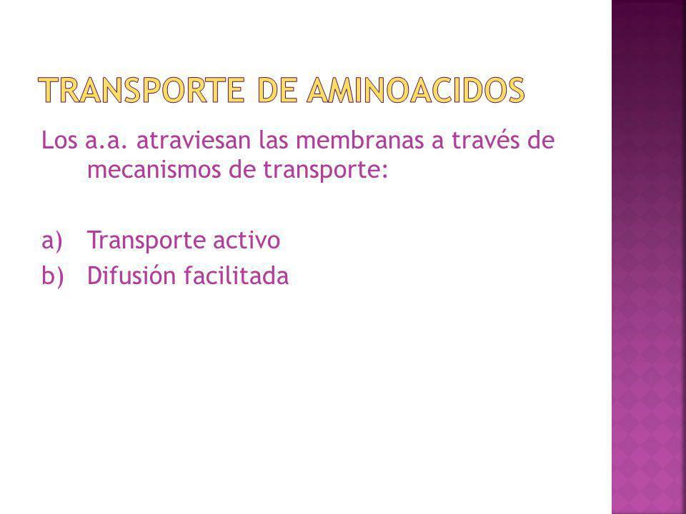 Los a.a. atraviesan las membranas a través de mecanismos de transporte: a)Transporte activo b)Difusión facilitada