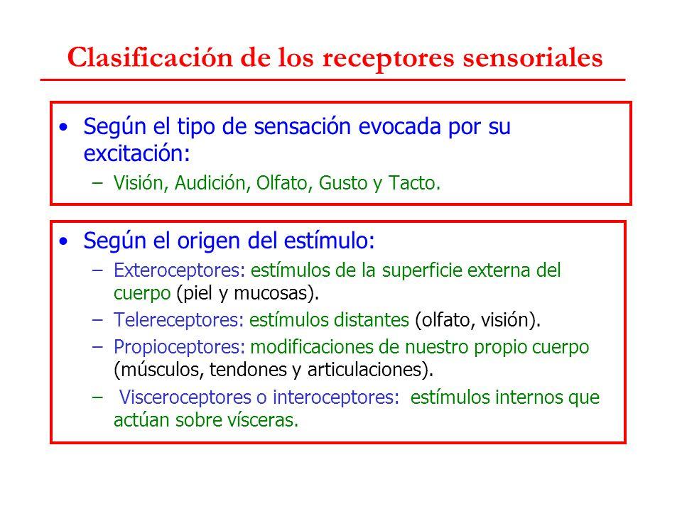 Quimiorreceptores Del gusto: papilas gustativas.Olfatorios: epitelio olfatorio.