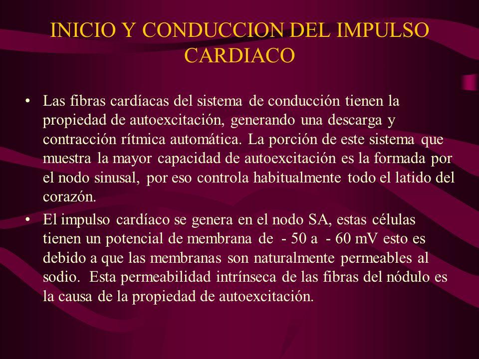 INICIO Y CONDUCCION DEL IMPULSO CARDIACO Las fibras cardíacas del sistema de conducción tienen la propiedad de autoexcitación, generando una descarga