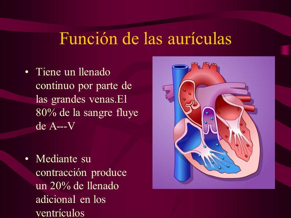 Función de las aurículas Tiene un llenado continuo por parte de las grandes venas.El 80% de la sangre fluye de A---V Mediante su contracción produce u