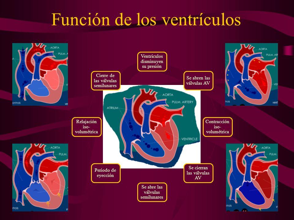 Función de los ventrículos Ventrículos disminuyen su presión Se abren las válvulas AV Contracción iso- volumétrica Se cierran las válvulas AV Se abre