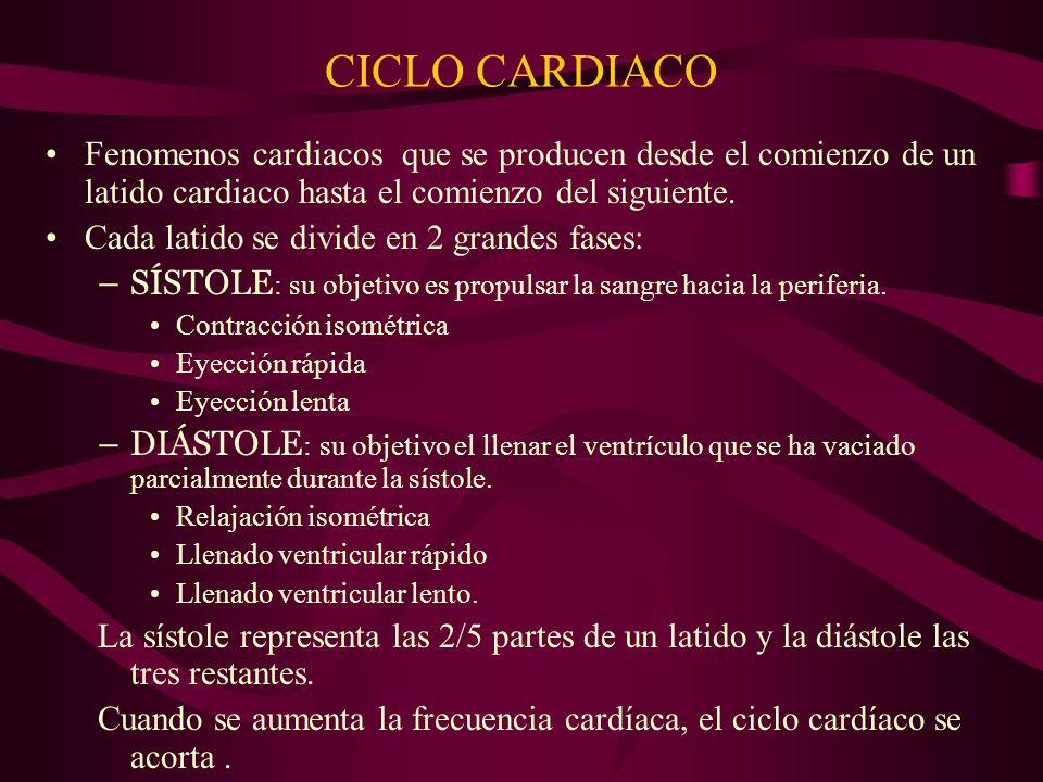 CICLO CARDIACO Fenomenos cardiacos que se producen desde el comienzo de un latido cardiaco hasta el comienzo del siguiente. Cada latido se divide en 2