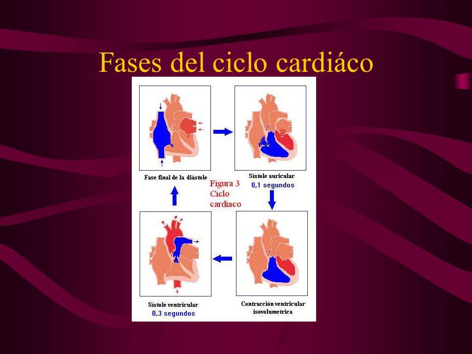 Fases del ciclo cardiáco