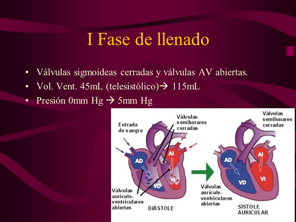 I Fase de llenado Válvulas sigmoideas cerradas y válvulas AV abiertas. Vol. Vent. 45mL (telesistólico) 115mL Presión 0mm Hg 5mm Hg