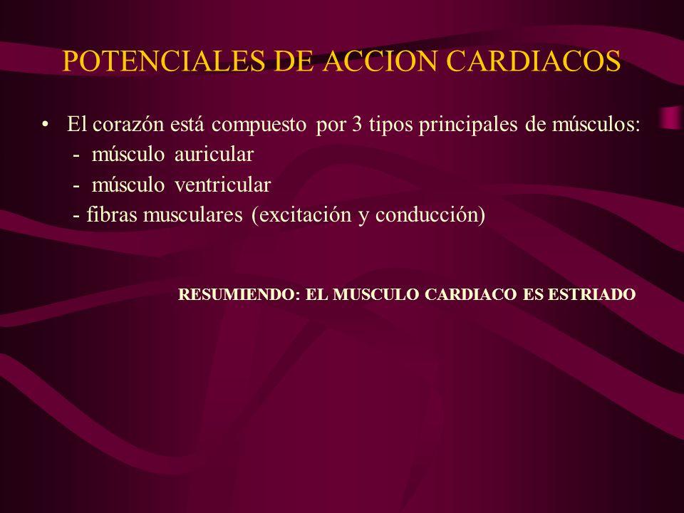 POTENCIALES DE ACCION CARDIACOS El corazón está compuesto por 3 tipos principales de músculos: - músculo auricular - músculo ventricular - fibras musc