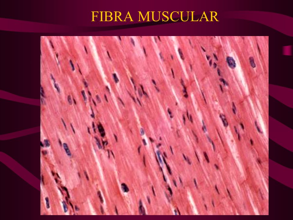 FISIOLOGIA GUYTON 9na ED 1996:115-138. THE CARDIAC PUMP, CARDIOVASC PHYSIOL, BERNE R. 1997: 55-816 FIBRA MUSCULAR
