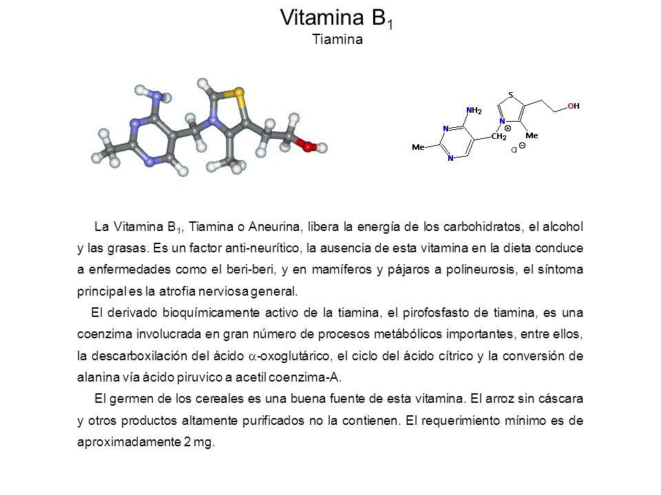Vitamina B 1 Tiamina La Vitamina B 1, Tiamina o Aneurina, libera la energía de los carbohidratos, el alcohol y las grasas.