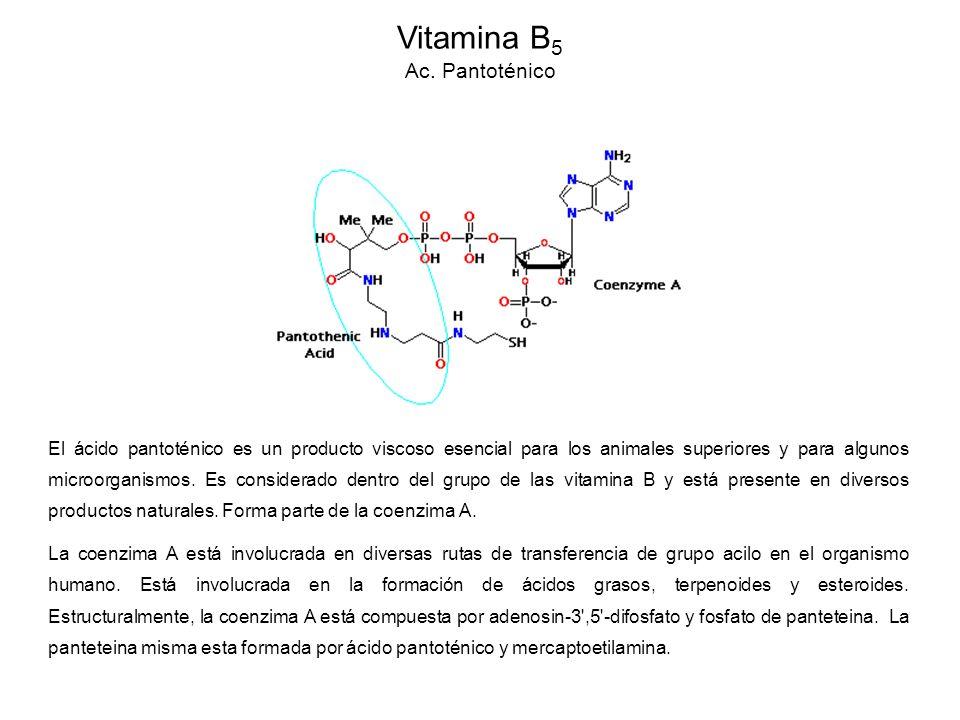 El ácido pantoténico es un producto viscoso esencial para los animales superiores y para algunos microorganismos.