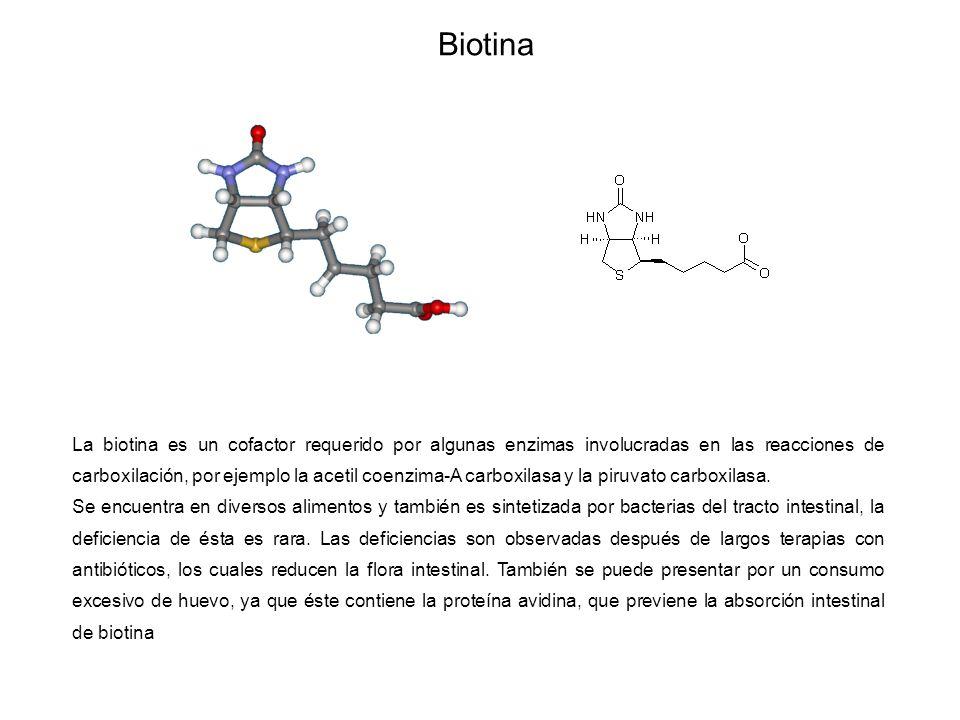 Biotina La biotina es un cofactor requerido por algunas enzimas involucradas en las reacciones de carboxilación, por ejemplo la acetil coenzima-A carboxilasa y la piruvato carboxilasa.