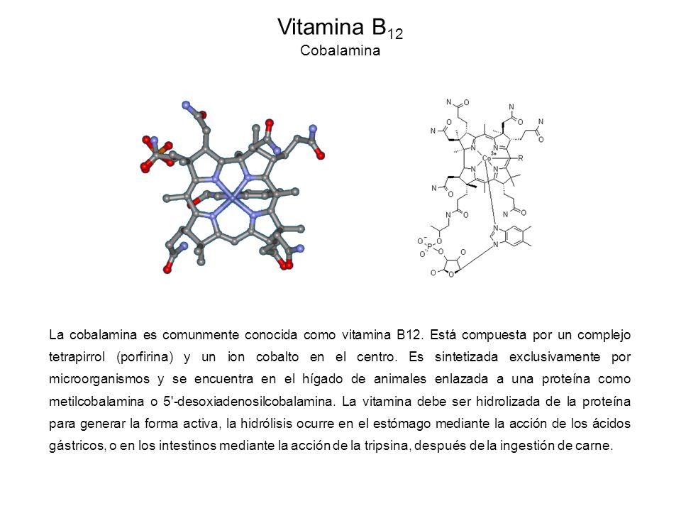 Vitamina B 12 Cobalamina La cobalamina es comunmente conocida como vitamina B12.