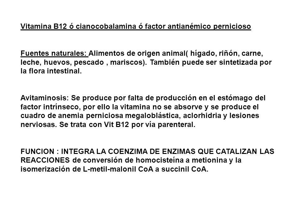 Vitamina B12 ó cianocobalamina ó factor antianémico pernicioso Fuentes naturales: Alimentos de origen animal( hígado, riñón, carne, leche, huevos, pescado, mariscos).