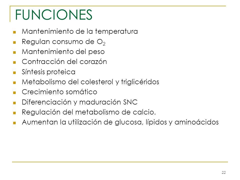 22 FUNCIONES Mantenimiento de la temperatura Regulan consumo de O 2 Mantenimiento del peso Contracción del corazón Síntesis proteica Metabolismo del c