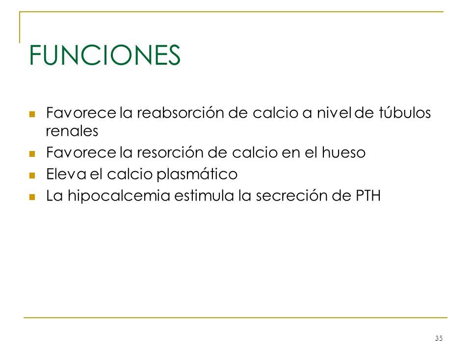 35 FUNCIONES Favorece la reabsorción de calcio a nivel de túbulos renales Favorece la resorción de calcio en el hueso Eleva el calcio plasmático La hi