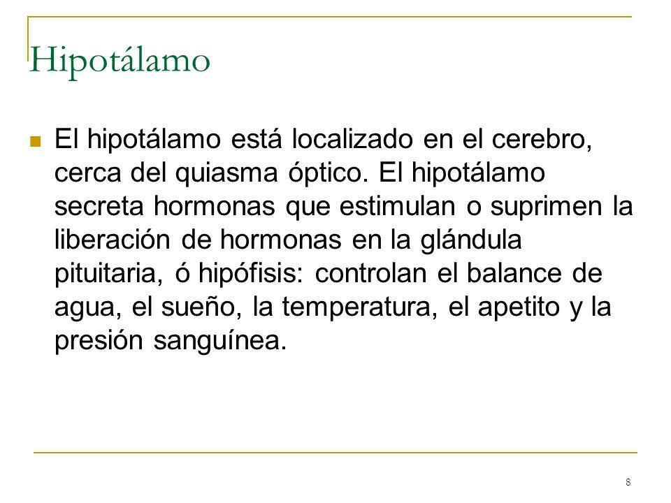 8 El hipotálamo está localizado en el cerebro, cerca del quiasma óptico. El hipotálamo secreta hormonas que estimulan o suprimen la liberación de horm