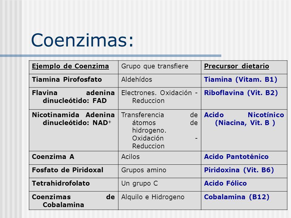 Coenzimas: Ejemplo de Coenzima Ejemplo de Coenzima Grupo que transfiere Precursor dietario Tiamina PirofosfatoAldehídosTiamina (Vitam. B1) Flavina ade