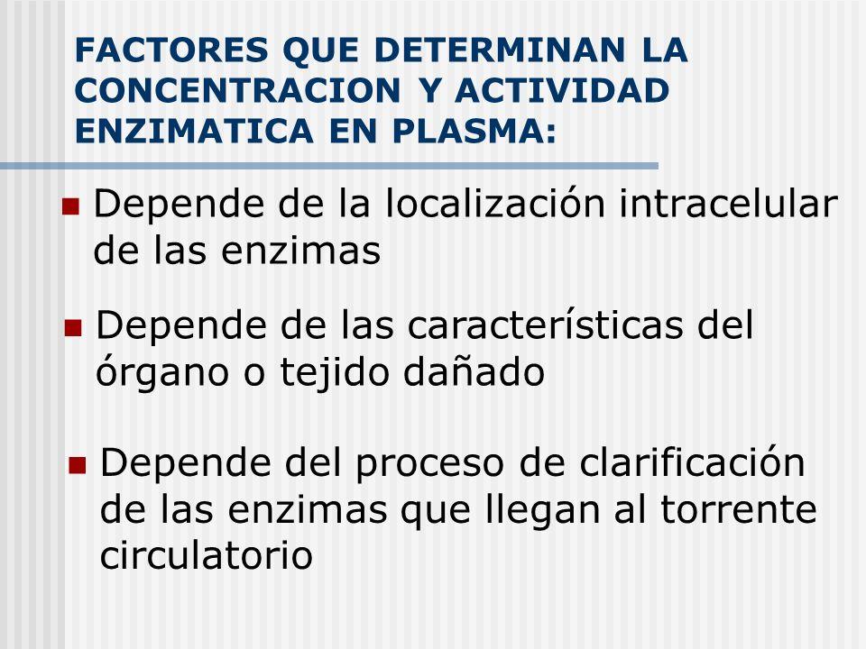 FACTORES QUE DETERMINAN LA CONCENTRACION Y ACTIVIDAD ENZIMATICA EN PLASMA: Depende de la localización intracelular de las enzimas Depende de las carac