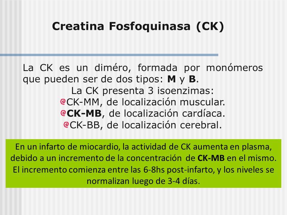 Creatina Fosfoquinasa (CK) La CK es un diméro, formada por monómeros que pueden ser de dos tipos: M y B. La CK presenta 3 isoenzimas: CK-MM, de locali