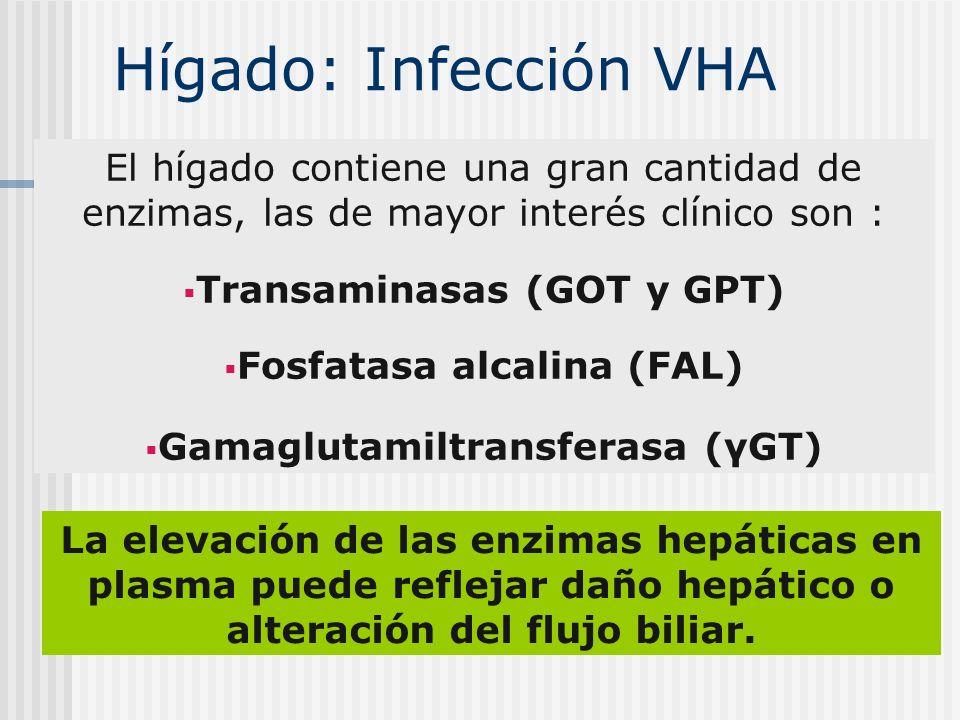 El hígado contiene una gran cantidad de enzimas, las de mayor interés clínico son : Transaminasas (GOT y GPT) Fosfatasa alcalina (FAL) Gamaglutamiltra