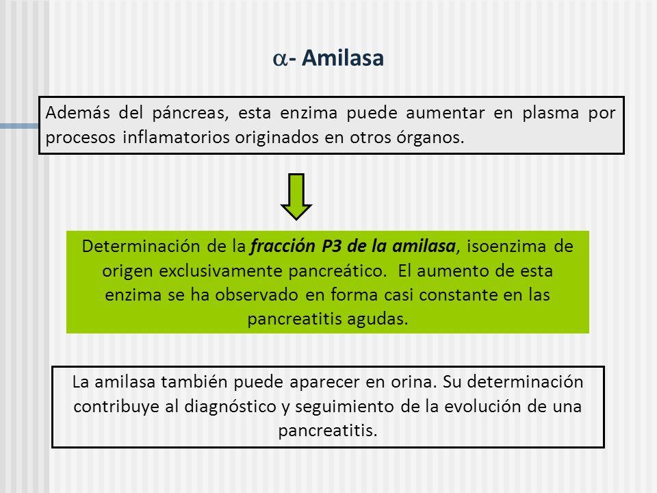 - Amilasa Además del páncreas, esta enzima puede aumentar en plasma por procesos inflamatorios originados en otros órganos. Determinación de la fracci