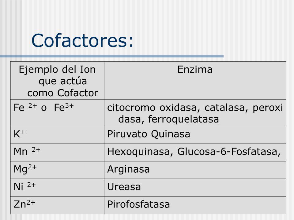 Cofactores: Ejemplo del Ion que actúa como Cofactor Enzima Fe 2+ o Fe 3+ citocromo oxidasa, catalasa, peroxi dasa, ferroquelatasa K+K+ Piruvato Quinas