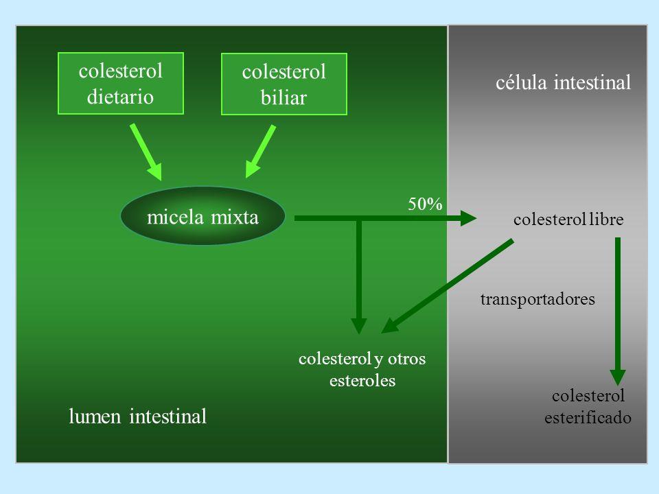 colesterol dietario colesterol biliar micela mixta célula intestinal colesterol libre colesterol esterificado colesterol y otros esteroles lumen intes