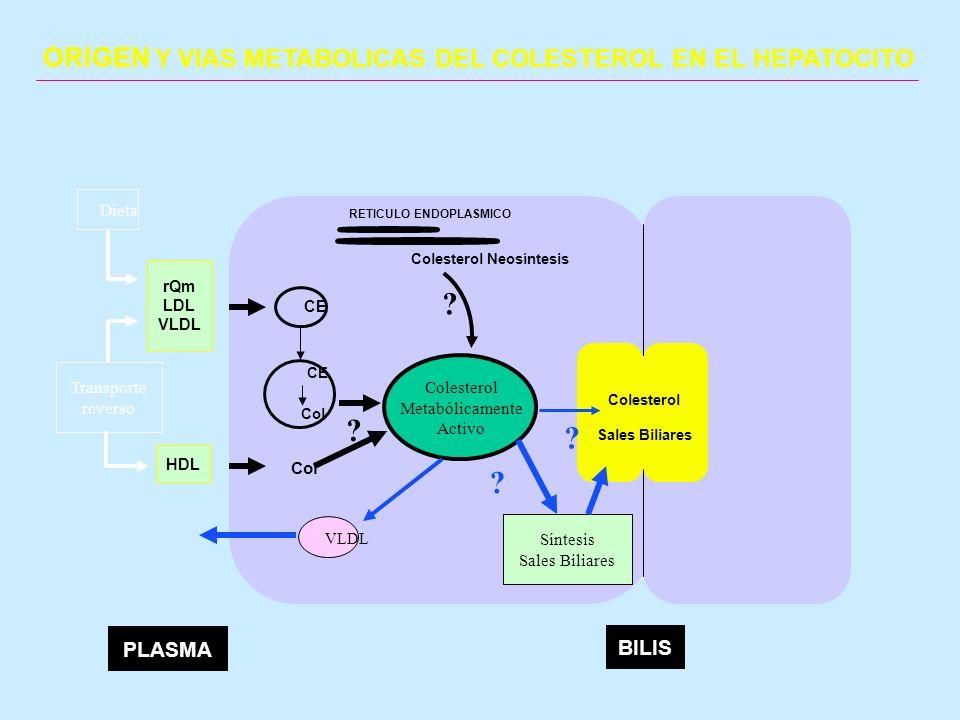 CE HDL rQm LDL VLDL Colesterol Neosíntesis RETICULO ENDOPLASMICO BILIS PLASMA Col Colesterol Sales Biliares CE Colesterol Metabólicamente Activo Sínte