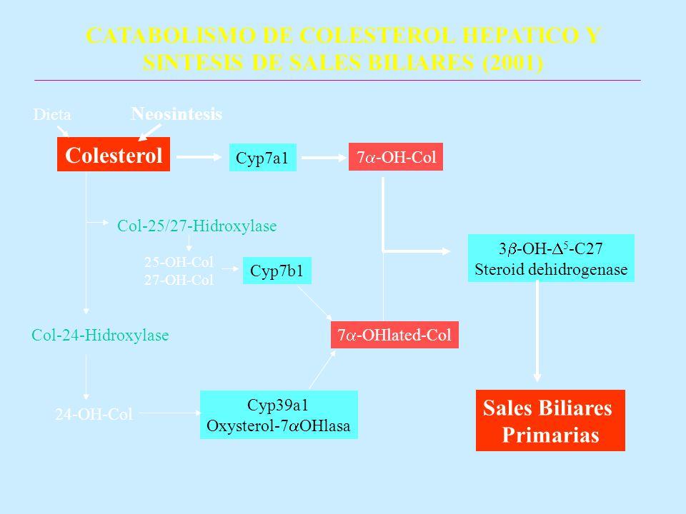CATABOLISMO DE COLESTEROL HEPATICO Y SINTESIS DE SALES BILIARES (2001) Colesterol Dieta Neosintesis 7 -OH-Col Cyp7a1 25-OH-Col 27-OH-Col 24-OH-Col Col