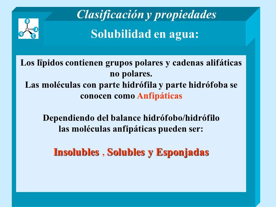 Solubilidad en agua: Los lïpidos contienen grupos polares y cadenas alifáticas no polares. Las moléculas con parte hidrófila y parte hidrófoba se cono
