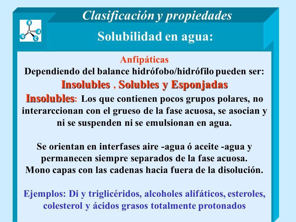 Solubilidad en agua: Anfipáticas Dependiendo del balance hidrófobo/hidrófilo pueden ser: InsolublesSolubles y Esponjadas Insolubles, Solubles y Esponj