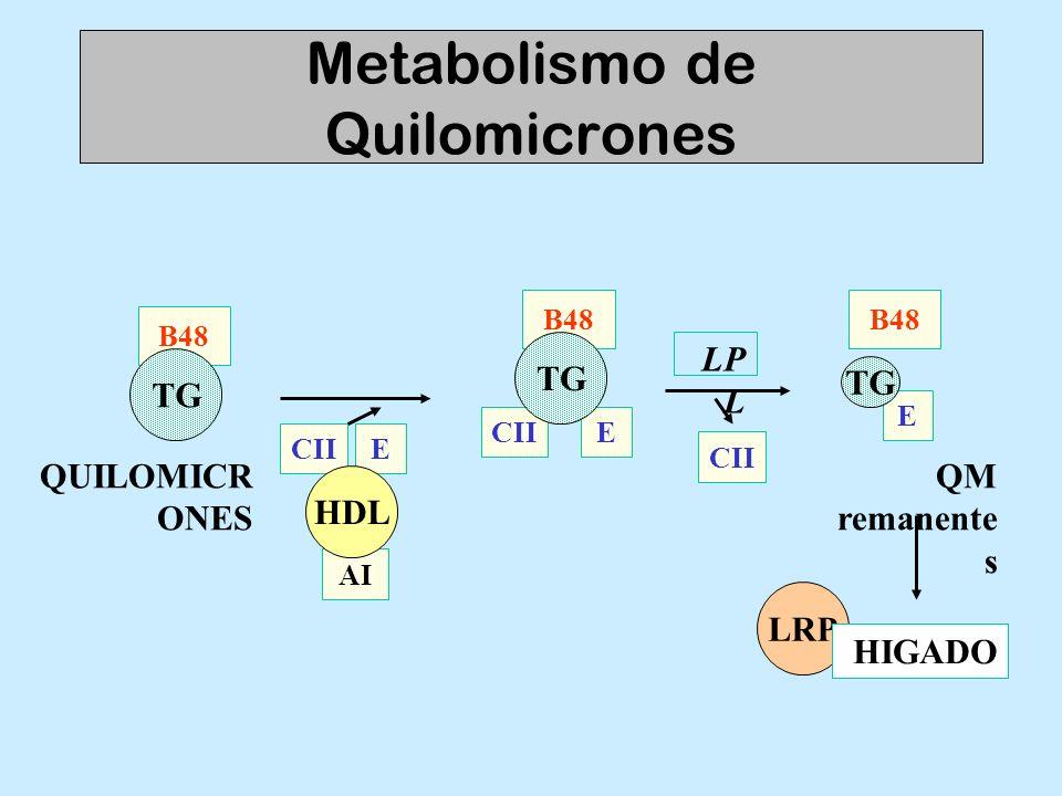 Metabolismo de Quilomicrones E CII B48 TG AI CII E HDL LP L CII B48 TG QUILOMICR ONES E B48 TG QM remanente s LRP HIGADO