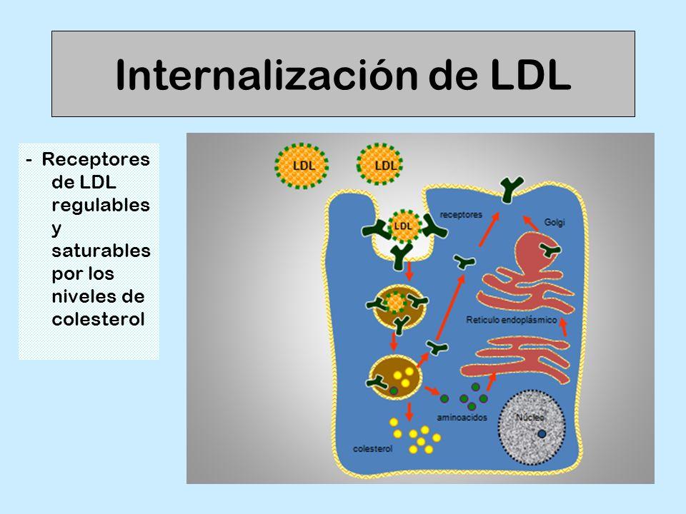 Internalización de LDL - Receptores de LDL regulables y saturables por los niveles de colesterol