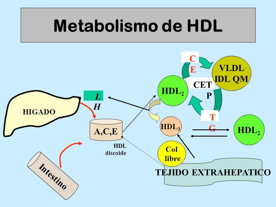CET P Metabolismo de HDL VLDL IDL QM LHLH HIGADO A,C,E Intestino HDL discoide HDL 2 TGTG CECE HDL 3 TEJIDO EXTRAHEPATICO Col libre