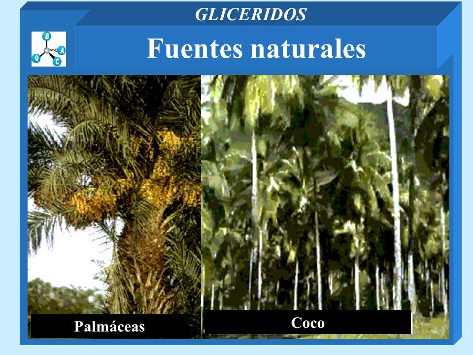 Fuentes naturales GLICERIDOS Palmáceas Coco