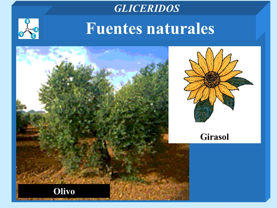 Olivo Girasol Fuentes naturales GLICERIDOS