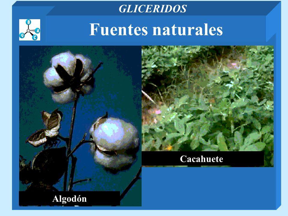 Cacahuete Algodón Fuentes naturales GLICERIDOS